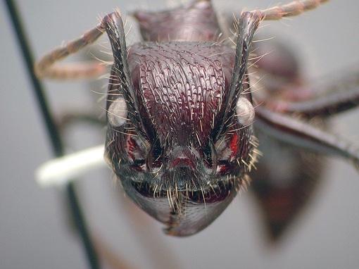 муравьи виды с картинками