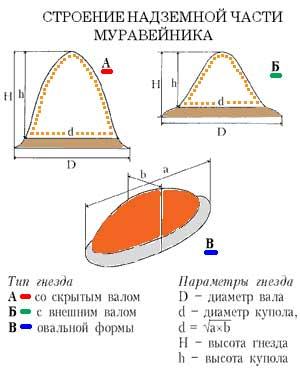 Промеры и типы гнезд рыжих лесных